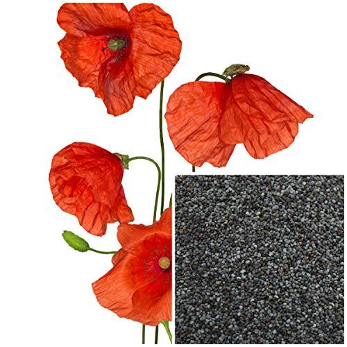 Shoppy Star Germinación de las semillas: 4 oz: semillas de amapola, materiales de fabricación de jabón orgánicos,...