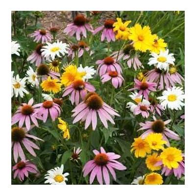 Non GMO Bulk Partial Shade Wildflower Seed Mix (1/4 lb) 130, 000 Seeds : Garden & Outdoor