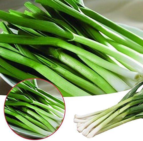 Rosepoem Vegetales - Semillas de ajo - 200 semillas - Paquete económico