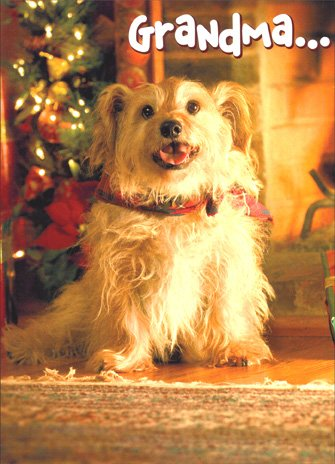 Mixed Breed To Grandma - Dog Christmas (Best Avanti Press Grandma Cards)