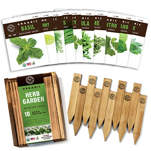Best Herbs Plants