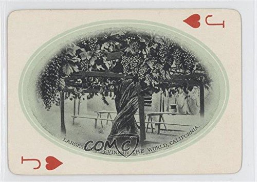 Grapevine Base - Largest Grapevine in the World, California (Trading Card) 1907 M. Rieder California Souvenir Playing Cards - [Base] #JH
