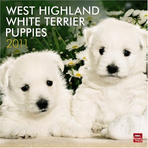 West Highland White Terrier Puppies 2011 Square (Multilingual - Calendar 2010 Puppies Terrier