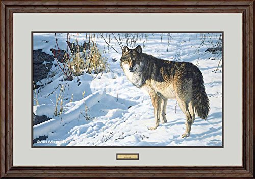 - Lone Wolf Framed Limited Edition Print by Jim Hautman