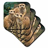 3dRose cst_83592_3 Africa. Southwest African Meerkat Wildlife NA02 AJE0279 Adam Jones Ceramic Tile Coasters, Set of 4