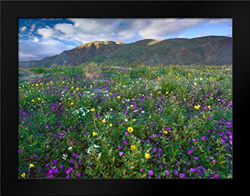 Wildflowers Carpeting The Ground Beneath Coyote Peak, Anza-Borrego Desert, California Framed Art Print by Fitzharris, Tim (Anza Borrego Wildflowers Best Time)