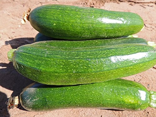Organic NON GMO Vegetable & Herb Seeds- Fortified with Mycorrhizae for Easy Organic Growing (Zucchini 25 Fortified Seeds))