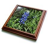 3dRose trv_21052_1 Bluebonnet Trivet with Ceramic Tile, 8 by 8