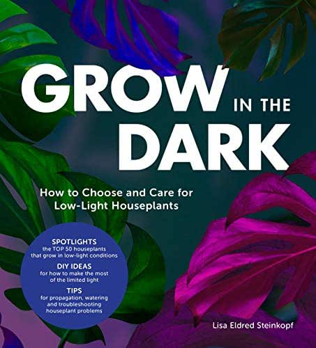 Grow in the Dark: How to Choose and Care for Low-Light Houseplants