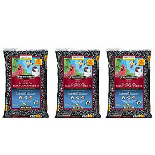 Pennington Select Black Oil Sunflower Seed Wild Bird Feed, 20 lbs (Pack of 3) by Pennington