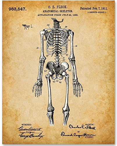 Skeleton - 11x14 Unframed Art Print - Great Gift for Doctors, Nurses, Medical and Nursing Students