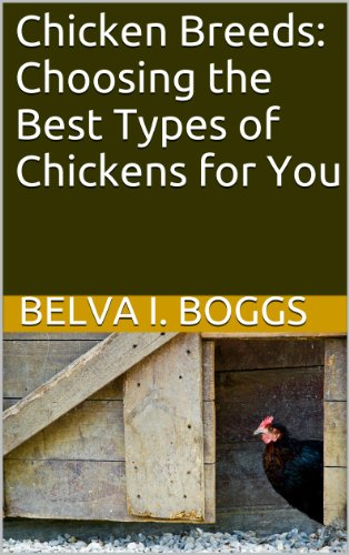 Chicken Breeds: Choosing the Best Types of Chickens for You (Best Egg Laying Breeds)