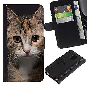 YiPhone /// Tirón de la caja Cartera de cuero con ranuras para tarjetas - Gatito joven del gato - Samsung Galaxy S5 V SM-G900