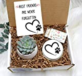 Custom Pet Sympathy Gift - Pet Sympathy Gift - Pet Loss Gift - Pet Memorial - Sympathy gift box - sorry gift box - live succulent Gift Box