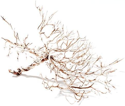 Nano Pisces 5 Mini Bonsai Tree