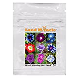 Rare Flower Morning Glory Mix Seeds, 50