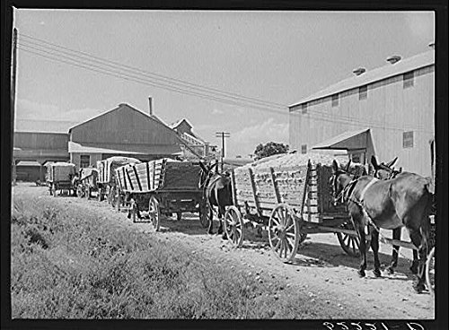 HistoricalFindings Photo: Delta & Pine Land Company of Mississippi,MS,Farm Security Administration,FSA,5 (Delta & Pine Land Company Of Mississippi)