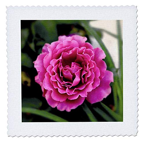 3dRose Stamp City - Flowers - Photograph of a Lavendar Angel Face Rose Growing in Our Flower Garden. - 25x25 inch Quilt Square (qs_290779_10)
