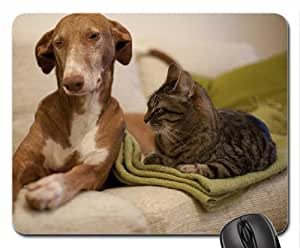 Cat and dog Cute Cool Decorative Design Animal Cat Mousepad Rainbow Designs by ruishername