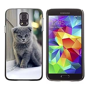 Carcasa Funda Case // V0000910 Cat Kitty Animal Pattern // Samsung Galaxy S5 i9600