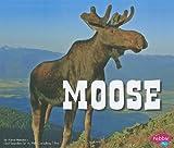 Moose, Annie Hemstock, 1429677058