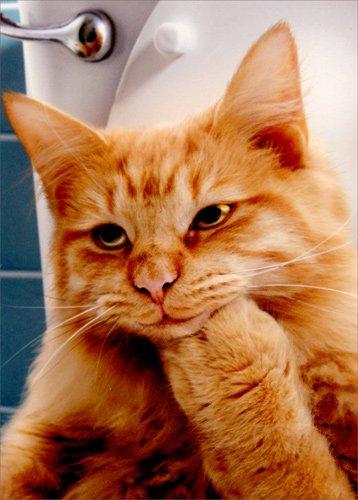 Thinking Cat On Toilet - Avanti Funny Friendship Card