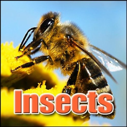 insect-buzz-large-flying-insect-fly-by-animal-insect-creatures