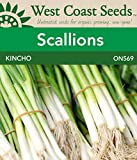 A standard green onion for summer and fall production, Kincho scallion seeds are Japanese type scallions with dark-green leaves and tall, straight, single-stalk stems that do not bulb. Increase the white stem length by planting in trenches and hillin...