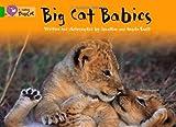Big Cat Babies Workbook