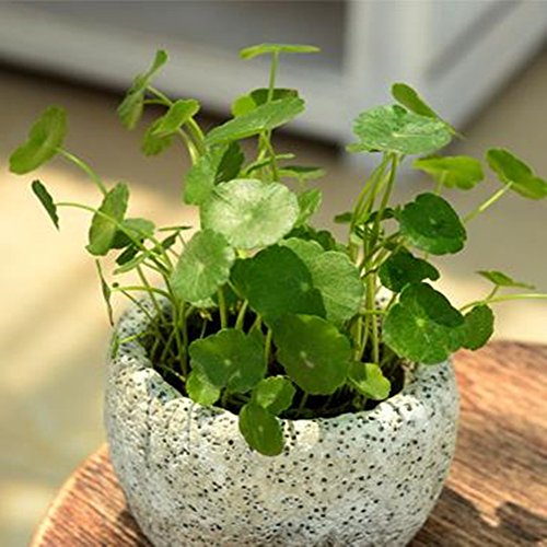 UName Moonwalk Series Succulent Planters, Set of 2 Mini Ceramic Planters, Cube, Cylinder,.UN293