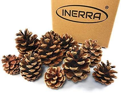 INERRA Pigne Ghirlanda /& Ghirlanda Decorazioni Naturale Albero di Natale 30 Cones