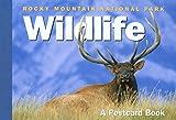 Rocky Mountain National Park Wildlife: A Postcard Book (Postcard Books)