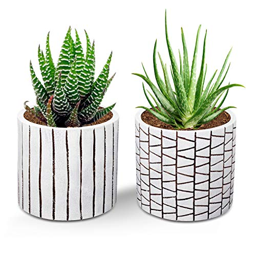 (Brief Succulent Pots, 4 inch Diameter, 2 Pack Modern Cement Cactus Flower Aloe Snake Plant Planter Container with Drainage Hole, White)