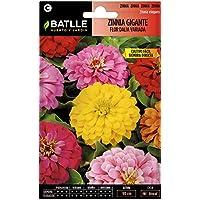Semillas de Flores - Zinnia Gigante Flor de Dalia variada - Batlle