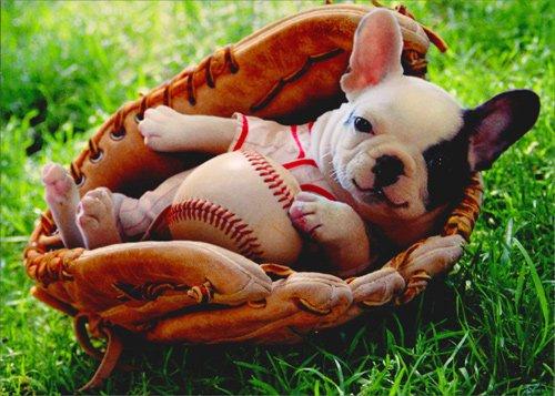 Puppy In Baseball Mitt - Avanti Funny Dog New Baby Card