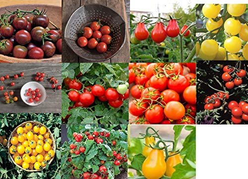David's Garden Seeds Collection Set Tomato Cherry NEP933V (Multi) 11 Varieties 550 Seeds (Non-GMO, Open Pollinated, Heirloom, Organic)