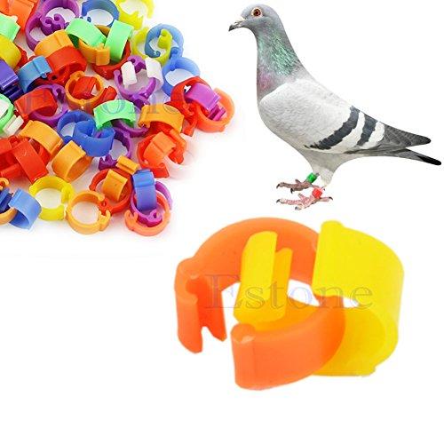 Amrka 100Pcs 8mm Chicken Hen Pigeon Leg Poultry Bird Dove Chicks Duck Parrot Clip Rings Band