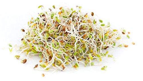 Certified Non-GMO Alfalfa for Sprouting - Healthy Sprouts (1lb - Organic) Certified Organic Alfalfa Seeds