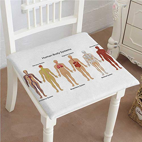 """$20.99 Mikihome Dining Chair Pad Cushion Human Body with Central Nervous Network Skeleton and Neurons Image Muscle System Multi Fashions Indoor/Outdoor Bistro Chair Cushion 22""""x22""""x2pcs"""