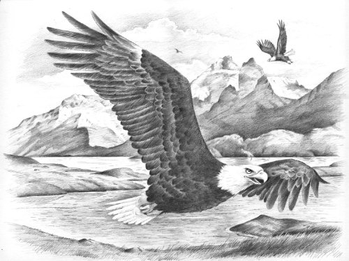 Reeves Soaring Eagles Sketching by Numbers, Large
