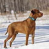 beebiepet Classic Nylon Dog Collar with Quick
