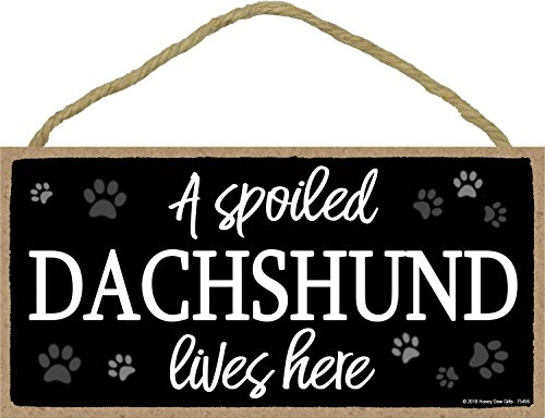 A Spoiled Dachshund Lives Here - 5 x 10 inch Hanging Dachshund Decor, Wall Art, Decorative Wood Sign Home Decor, Dachshund Gifts ()