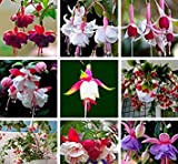 Mr.seeds 9 Kinds of Fuchsia Perennial Flower Seeds Can be Choose Potted Flowers DIY Planting Flowers Bell Flower Seeds - 100 PCS