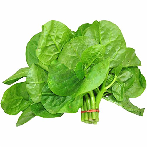 Dwarf Malabar Spinach Big Leaf 200 Pcs Seeds Non-GMO Heirloom