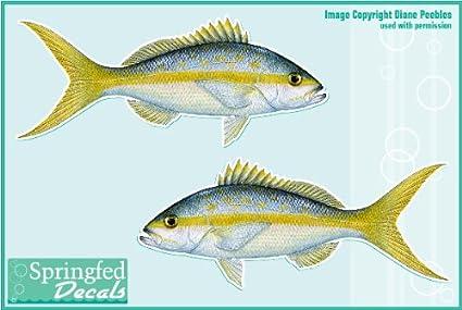 YELLOWTAIL SNAPPER Vinyl Fish Decals 6