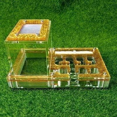 Transparent Ameisennest Ameisenfarm Ameisenwerkstatt Ameisenfütterung Einfach zu installieren 25MM Bambusrohre Ameisenhaus Geburtstagsgeschenk (Color : Gold)
