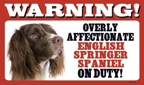 Warning Overly Affectionate English Springer Spaniel On Duty