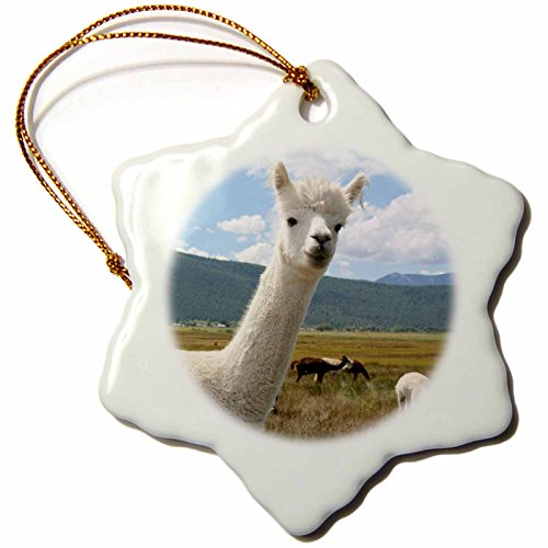 3dRose LLC orn_92663_1 Porcelain Snowflake Ornament, 3-Inch,Victory Ranch Alpaca Farm, Mora, New Mexico-Julien McRoberts by 3dRose