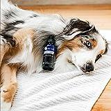 kin+kind Clean Ears, Organic Dog Ear Cleaner, 4