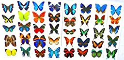 Temporary Butterfly Tattoos - (10 Sheets) - Party Favors, Fake Tattoo